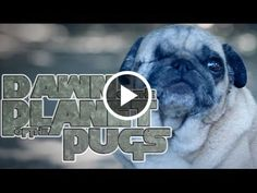 Dawn of the planet of the pugs