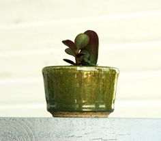 baby jade jungle in emerald hand thrown pottery <3