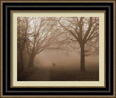 Foggy Morning Photo Art. An idea what it could look like framed.
