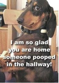 LOL this made me laugh cause Buster left me poop presents on the floor for Christmas this year.
