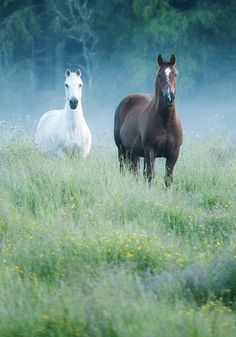 "Horses - titled ""You & Me! "" - by dranilj1"