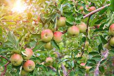 Obst & Gemüse: Saisonal einkaufen per App - Ernährung –            CODECHECK.INFO