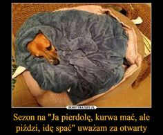 Very Funny Memes, Funny Thoughts, Best Memes, Animals And Pets, Dachshund, Haha, I Am Awesome, Funny Pictures, Jokes