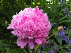 7 Flowers To Plant In The Garden For Natural Pest Control