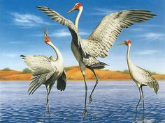Australian Geographic : Wildlife Animals Paintings by Various Artists - The Brolga , Australian Wildlife Painting by Kevin Stead 24 Wildlife Paintings, Wildlife Art, Animal Paintings, Australian Painting, Australian Animals, Cover Art, Reptiles, Bird Artwork, Horse Drawings