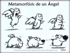 Metamorfosis de un angel