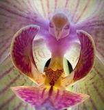 Rare Birds Phalaenopsis Orchid Bonsai African Cymbidiums Phalaenopsis Bonsai bird Flower for Home Garden Decoration Orchid Seeds, Cactus Seeds, Bonsai Seeds, Flower Seeds, Phalaenopsis Orchid, Orchid Plants, Orchids, Mini Cactus, Balcony Flowers