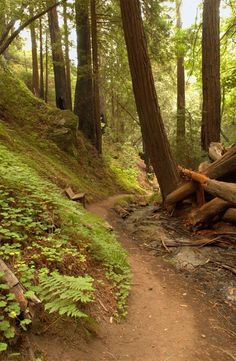 Julia Pfeiffer Burns State Park, on the Central Coast of California, stretches from the Big Sur coastline into nearby 3,000-foot ridges. The park features redwood, tan oak, madrone, chaparral, & an 80-foot waterfall that drops from granite cliffs into the ocean from the Overlook Trail. If you walk inland from Julia Pfeiffer Burns State Park waterfall lookout area you'll find wooded areas like this one, as well as some of the best coastal views in Big Sur / © Photo by Brock Bradford