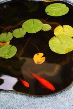Fish bowl Kamalura,Japan