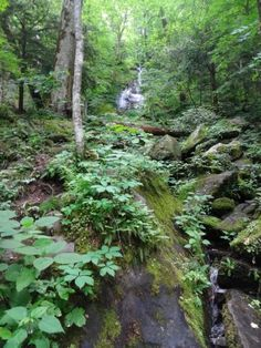 Porters Creek Trail, Great Smoky Mountains National Park