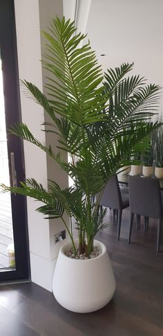 Our stunning paradise palm tree is perfect for adding a tropical feeling to your home! Available in 5 different sizes, this simply beautiful fake palm tree is suitable for any space in your home. Fake Palm Tree, Palm Tree Plant, Fake Trees, Trees To Plant, Fake Plants Decor, House Plants Decor, Plant Decor, Plantas Indoor, Garden Trees