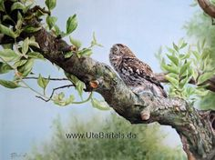 """""""Im Blick"""" (In the Focus) 70 x 60 cm Silkpainting www. Wildlife Art, Artist, Painting, Animals, Owls, Silk Painting, Nature, Animales, Kunst"""