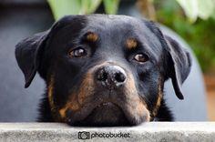 Perrito #dog