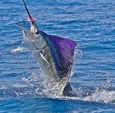 Freedom fighter,  Florida Keys ~ facebook.com/staysalty