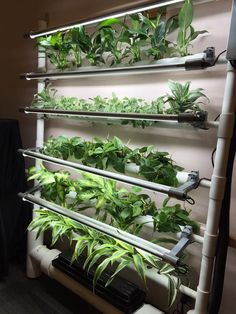 The OPCOM Farm GrowWall sports dozens of air purifying plants at Cultivate 16'.