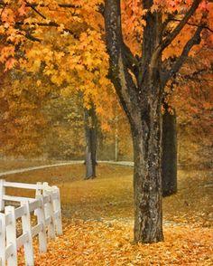 Autumn in Pittsburgh.