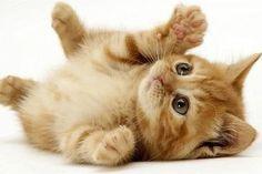 gatto - Hledat Googlem