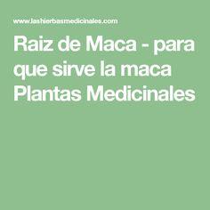 Raiz de Maca - para que sirve la maca Plantas Medicinales