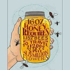 16 oz of honey requires 1152 bees to travel 112000 miles and visit 4.5 million flowers. WE need our bees to survive. .......
