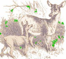 O Filhote de Cervo e sua Mãe - Portal SER - Saúde, Energia & Resgate