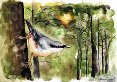 Nuthatch painting by Alicia Sivertsson, 2015. Aquarelle on paper.