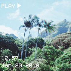 aesthetic profile picture landscape Whatsapp Profile Picture, Horse Wallpaper, Landscape Wallpaper, Summer Feeling, Jurassic Park, Aesthetic Pictures, Aesthetic Wallpapers, Cool Pictures, Hawaii