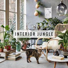 Trend: Interior Jungle