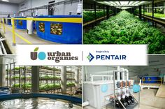 Introducing Urban Organics Pentair Group  A unique collaboration between Pentair and Urban Organics – has been created to help the world meet its growing need for protein and will leverage Pentair's advanced technologies, world-class scientific expertise and global resources to help accelerate the development of commercial scale modern aquaponics production facilities.  Read the Press Release: