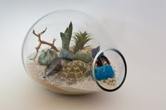 """Photo by: <a href=""""http://www.stellaalesi.com/"""" target=""""_blank"""">Stella Alesi</a>    desert terrarium with succulents and cacti"""