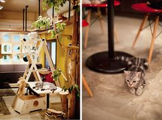 Gio Cat Cafe in Hong-Dae, Seoul, South Korea (I don't think Murphy's would like the cat cafe)