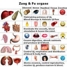 TCM Zang fu organs