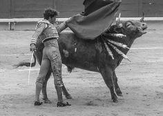 Manuel Escribano - Potrico (Pedraza de Yeltes - 28/03/2016). http://www.jeromem.com/blog/manuel-escribano-potrico-pedraza-de-yeltes #Arles
