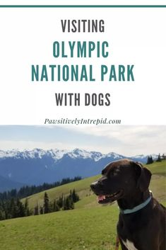 Olympic National Park - Pawsitively unflinching Source by pawsitivelyintrepid Olympic National Park Hikes, North Cascades National Park, Crater Lake National Park, Yosemite National Park, National Parks, Road Trip With Dog, Washington State Parks, Hiking Dogs, Olympic Peninsula