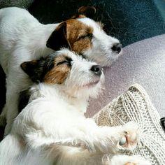 sweet sleeping #Gijsmans #GijsenPim #Pim