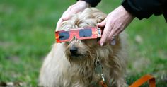 Solar Eclipse Prep for Pets: Eye Protection, Fear Factors and How to Safely Prepare Your Furry Friend https://link.crwd.fr/1tB6