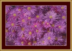 Pink Aster Blooms Cross Stitch Pattern