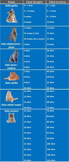 tabla de equivalencia entre edad humana y gatos