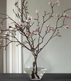 Terrain Tulip Magnolia Branches