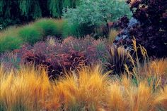 Designing with Ornamental Grasses- Mexican feather grass, purple fountain grass, lavender, pink-beige tufted oriental fountain grass and miscanthus. Right foreground is an annual Baby Bronze New Zealand flax with a Purple Smoketree beyond.