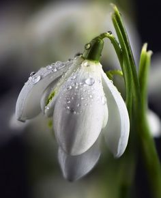 Find beauty everywhere My Flower, Flower Art, Flower Power, Amazing Flowers, White Flowers, Beautiful Flowers, Corporate Flowers, Botanical Flowers, Lily Of The Valley
