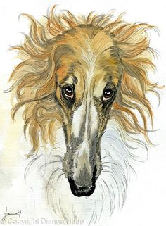 More Biscuits? No.5270 Borzoi Dog - watercolour / Ink
