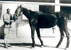 """Dorothy Brooke arriveerde in oktober 1930 in Cairo. Meteen na aankomst begon ze haar zoektocht naar nog in leven zijnde Engelse paarden. De dieren waren herkenbaar aan het legerbrandmerk in de vorm van een pijl. Dorothy werd onwel bij het eerste paard dat ze zag. Ze beschrijft de ervaring in haar dagboek: """"Het arme dier was vel over been. Zijn heupen leken wel een kapstok!"""" Ze vond de voormalige oorlogspaarden terug als lastdier, zwoegend in straten en steengroeven."""
