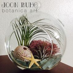 Botanical Art by Joon Buhg    //\\//\\//\\//\\//   Air Plant Terrarium    //\\//\\//\\//\\//    Email us for inquires and orders joonbuhgbythesea@gmail.com