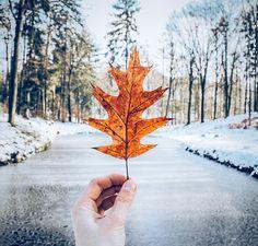 Snow/ frozen river/ winter