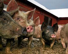 Lantbruk | Därför väljer konsumenter ekologisk mat | Lantbruk & Skogsland