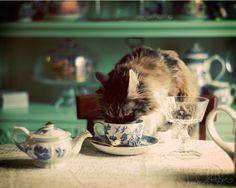 Sipping Milk - 8 x 10 Fine Art Photography Print. Jennifer Aitchison via Etsy #fpoe
