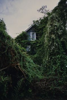 Overgrown house in Vancouver photographed by Ryan Mathieson