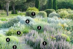 Plants that support frost and are resistant to drought to create a garden . Dry Garden, Gravel Garden, Plant Design, Garden Design, Drought Resistant Plants, Planting Plan, Coastal Gardens, Low Maintenance Garden, Mediterranean Garden