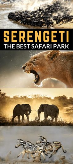 SafariBookings.com has published the definitive list of Africa's best safari parks. The in-depth study analyzed more than 3,000 reviews from safari tourists and industry experts alike. After careful consideration, Serengeti National Park in Tanzania was rated the best safari park of Africa.