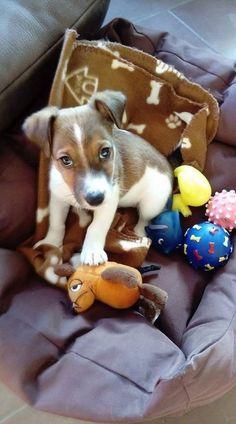 Aus der Facebook Gruppe: Jack Russell Terrier Lovers